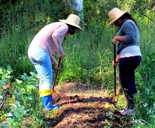 Camponeses: Mais além da convivência com ocapital